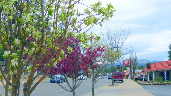 As the snowpack disappears on the mountains, spring blossom bloom in Ruidoso.