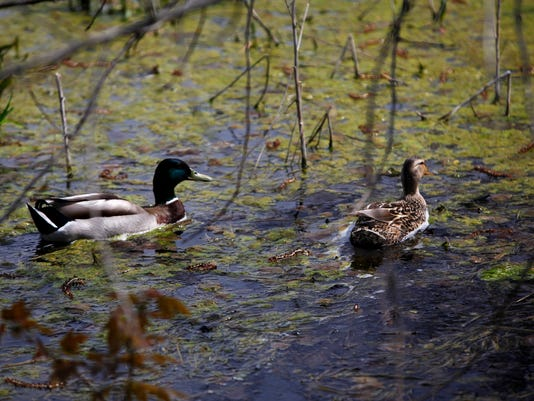 -MNI M 0502 Wetland 011.JPG_20130502.jpg