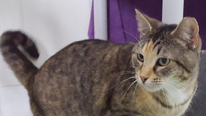 Vivian is ready for a loving home.