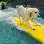 Last day to vote for Ventura's surfing dog