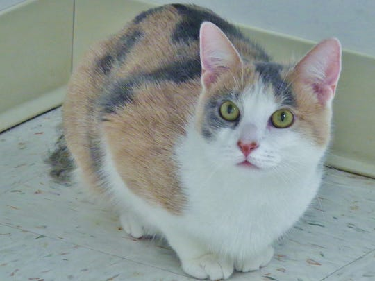 Moppet is a 1-year-old calico girl with incredibly unique markings. When you look at her back, she has some real interesting patterns to her fur - and her sparkling green eyes make her quite the pretty kitty!