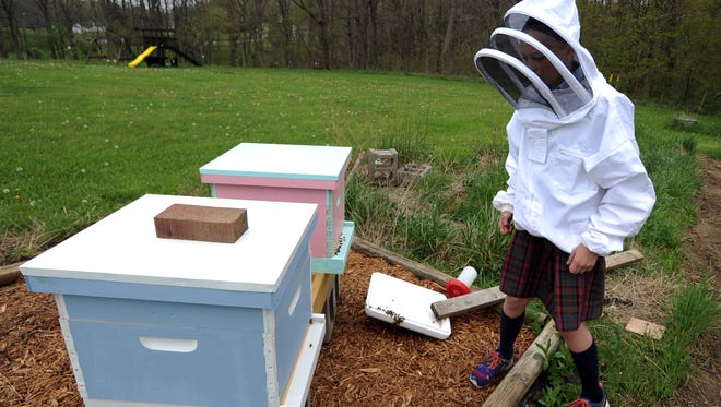 Madison Johnson approaches the bee hive box outside her home near Thornville. Johnson started the colony for a 4-H project with about 10,000 bees.