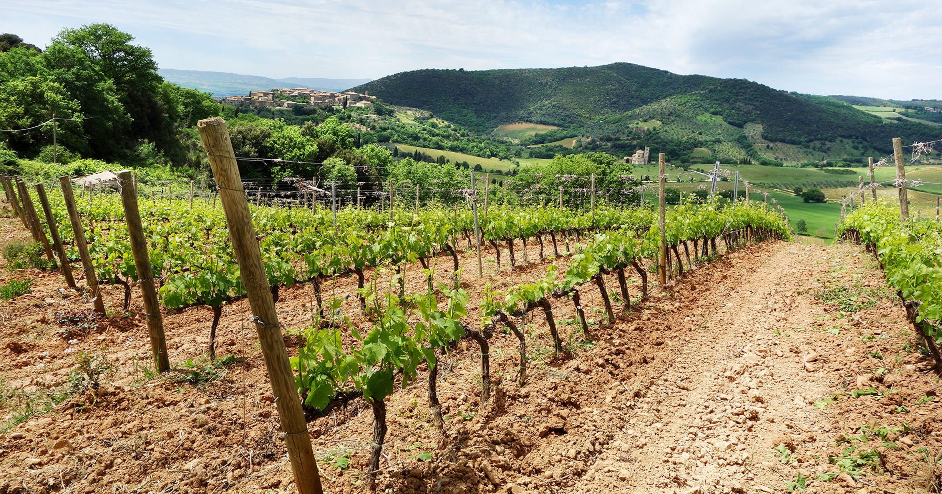 Rick Steves: Wonderful wineries in Tuscany
