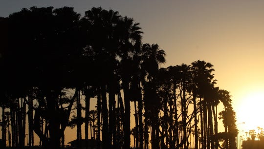 Palm trees are outlined as the sun sets in Ventura