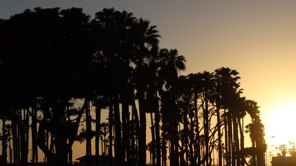 Palm trees are outlined as the sun sets in Ventura County.