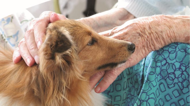 Pet Peace of Mind program will help Hospice patients and their pets.