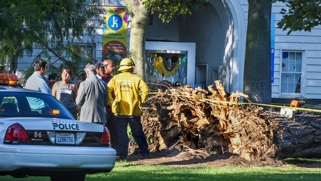 Officials stand by a tree that fell near the Kidspace Children's Museum in Pasadena, Calif., Tuesday, July 28, 2015.