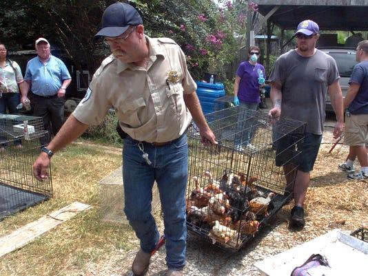 bird removal.jpg