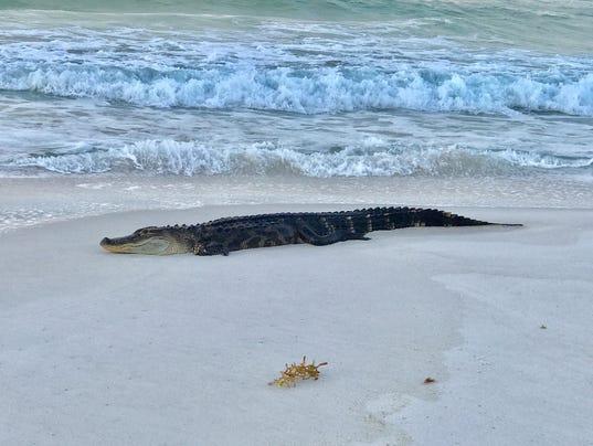 Pensacola Beach Florida Local Time