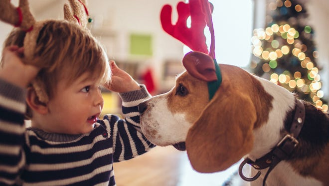 The holidays can be a stressful time for your pets, but there are ways to keep them calm and safe into the new year.