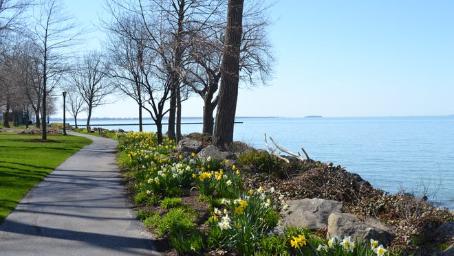 """Ohio's Most Beautiful Mile, shown here amongst flowering daffodils with the Catawba point jutting out in the distance, is one of the charms that caught the attention of """"Coastal Living"""" magazine."""