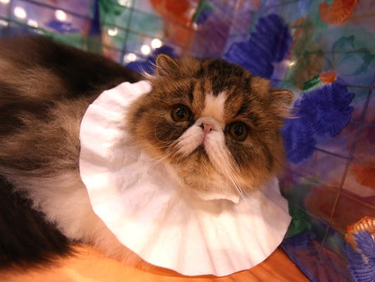 DFP sunday select ca