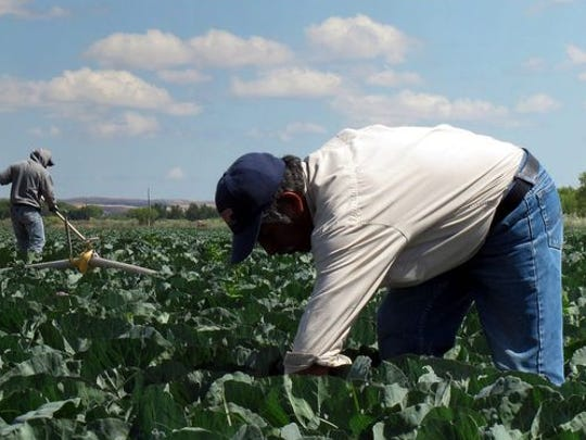 Migrant farm workers tend crops in Southern California in this file photo. New legislation aims to curb a shortage in agricultural labor, which has plagued producers in recent years.