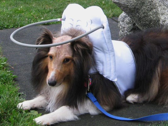Pets Halos for Blind Dogs