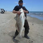 Joe Chafardon caught a 45-pound black drum fish off Assateague using a modified fish finder rig tipped with peeler.