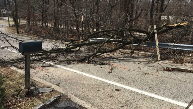 Fallen trees block a New Rochelle road and dragged power lines down, knocking out power in the area.