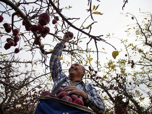 WSF 1201 Orchard workers 2.jpg