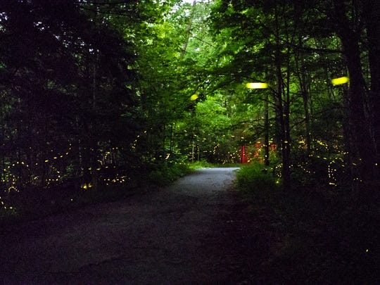 Synchronous fireflies fill the forest at the Elkmont campground in the Great Smoky Mountains National Park in Gatlinburg, Tennessee Thursday, June 7, 2018, where 984 people from places as far as Alaska descended to experience the synchronized flash patterns which peak during a two-week period in late May to mid-June. 1,800 parking permits were granted to some of the 22,000 people who entered the lottery. An estimated 800-1,000 people are expected at the campground each night.