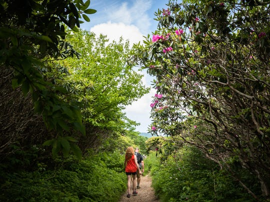 Hikers descend the Craggy Gardens trail, past blossoming rhododendrons Friday, June 15, 2018.