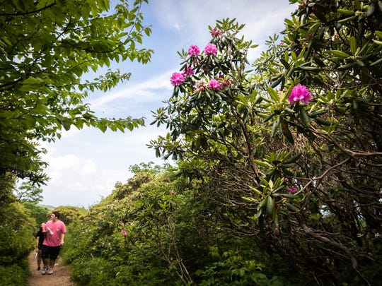 Andrew Glavin, and Emily Wasson, visiting from Pennsylvania, ascend the Craggy Gardens trail past blossoming rhododendrons Friday, June 15, 2018.