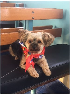 LB, a Yorkshire Terrier stolen from a Bowdoin Street home in Clifton, was returned two days later.