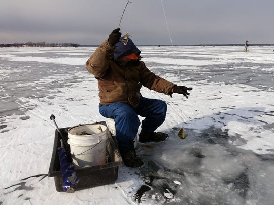 Bernard Johnson of Fairfield pulls a small perch from Lake Champlain during a fishing trip on Thursday, Jan. 14, 2016. Johnson catches perch to sell, supplementing his retirement income. Like many ice fishermen, Johnson said the warm winter has delayed his season.