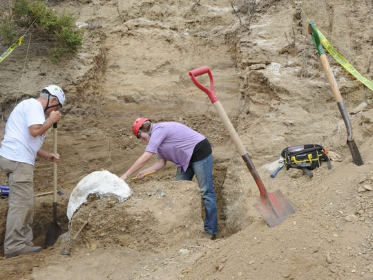 Don Morris, a retired Channel Islands National Park archaeologist, and preparator Monica Bugbee dig around the head and tusk of a mammoth found on the north end of Santa Rosa Island.