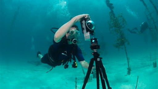 In this Aug, 9, 2014 photo provided by Catlin Seaview Survey, Mitchell Tartt, of the Office of National Marine Sanctuaries, trains to take 360-degree panoramas of the corals off the coast of Islamorada, Fla. U.S. government scientists hope people will soon be able to go online and get a 360-degree view of reefs and other underwater wonders, much like Google map?s ?street view? lets people look at homes. (AP Photo/Catlin Seaview Survey)