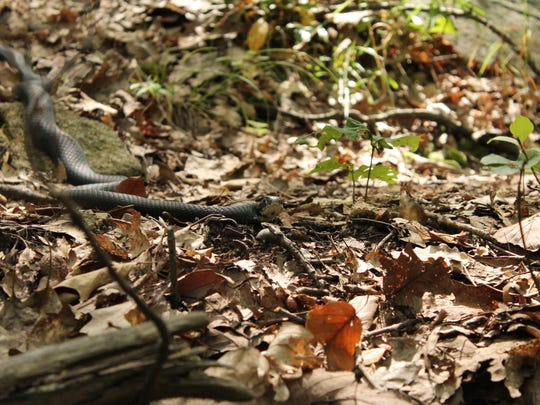 The snake that stopped me in my tracks.