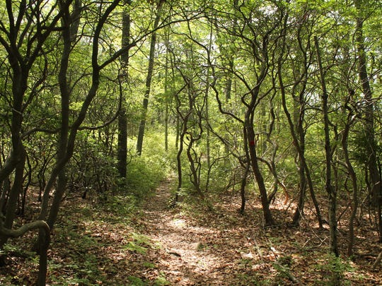The gnarled shapes of the trees along the path looked like a fairy tale.