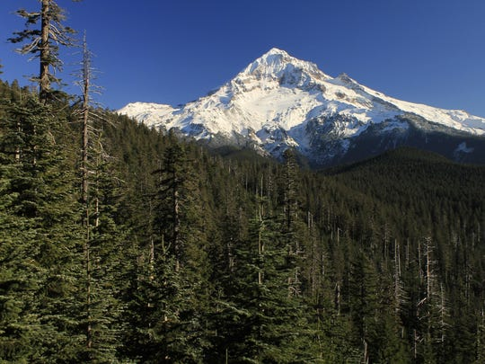 """This view from Bald Mountain of Mount Hood is one of the hikes found in Matt Reeder's book """"Off The Beaten Trail: Fantastic Unknown Hikes In Northwest Oregon and Southwest Washington."""""""