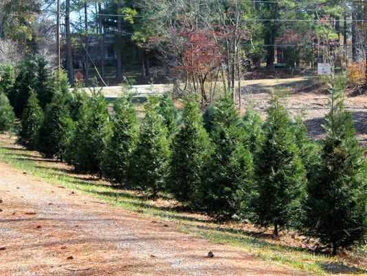 TreePhoto.jpg Buy Photo. Lazy Spread Christmas Tree Farm ... - Where You Can Buy A Christmas Tree In Clarksville, And Cut Your Own
