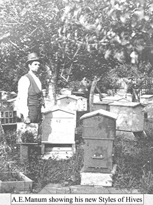 A.E. Manum of Bristol with some of his bee hives.