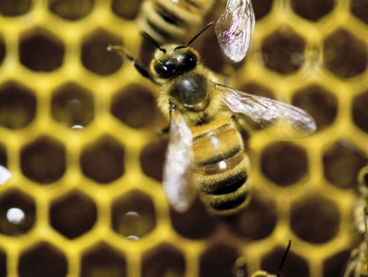 Europe Bees