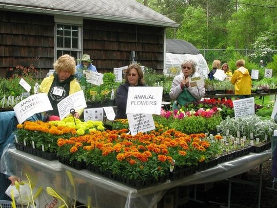 Marigolds at the Union County Spring Garden Fair 2017.