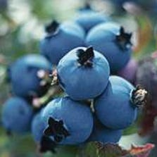 Piedmont Triad Farmers Market says this year's blueberry and blackberry crops have had one of the best seasons, despite delays.