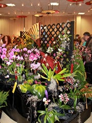 A scene from last year's Asheville Orchid Festival. This year's event will be March 24--25 at the North Carolina Arboretum.