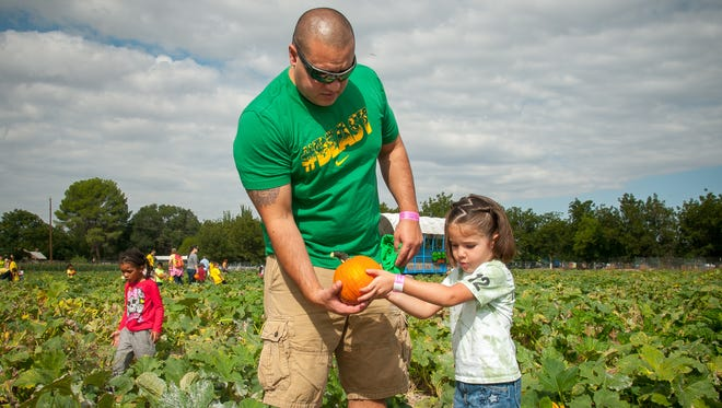 Juan Trivizo and his 5-year-old daughter Vivian Trivizo pick out pumpkins at the Mesilla Valley Maze.
