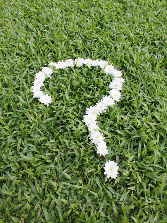 Question mark made from daisy flowers