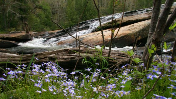 Bluets add spring color to the base of Bridal Veil