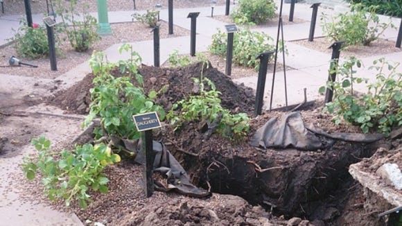 The once pristine rose garden at the DiFiore Center was torn up following a burst pipe.