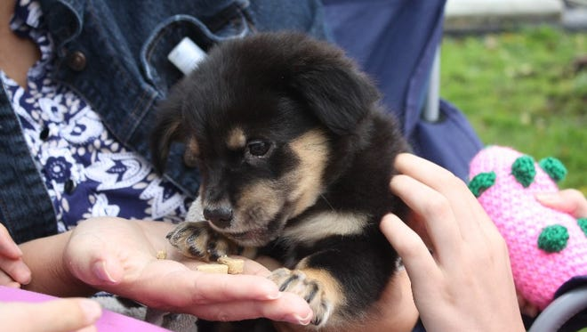 Eight-week-old Napoleon receives a little TLC from Silvia Zanartu in the Southern Indiana Animal Rescue booth at Saturday's Spring Pet Fair hosted by Access Veterinary Care and Dogwood Inn Kennels in Jeffersonville