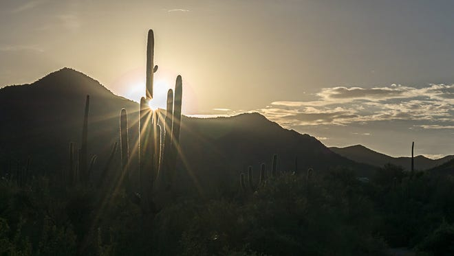 The rising sun in Saguaro National Park, near Tuscon, signals the start of another bright day in Arizona.