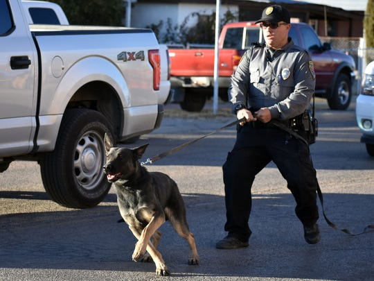 K9 Covi is released by his handler to take down a suspect during a demonstration.