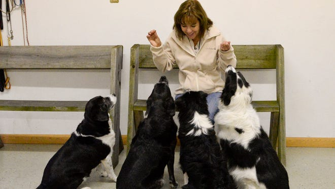 Animal behaviorist Mary Jackson talks to her dogs from left, Zoey, Maddy, Phoebe and Ellie, all dogs that she rescued from shelters. Mary is the owner and dog trainer of K-9 Perfection in Manitowoc. Sue Pischke/HTR Media. Photo taken on Monday, Nov. 17, 2014.