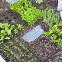 Urgent! Do these things for your North State spring garden now