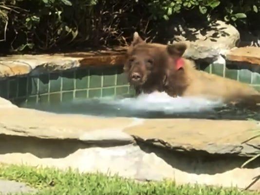 bear-hot-tub