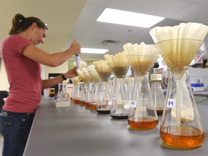 Intern Sarah Glatfelder, a graduate student from CSU, takes samples for testing in the new laboratory in New Belgium July 25, 2014.