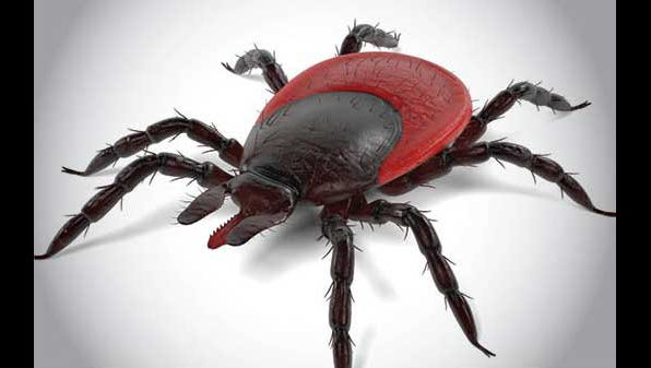 A tick needs to be attached for 36 to 48 hours before it can transmit Lyme disease