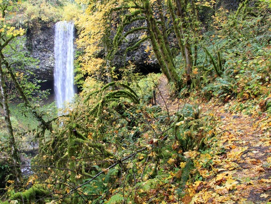 Behind Shellburg Falls in Santiam State Forest.